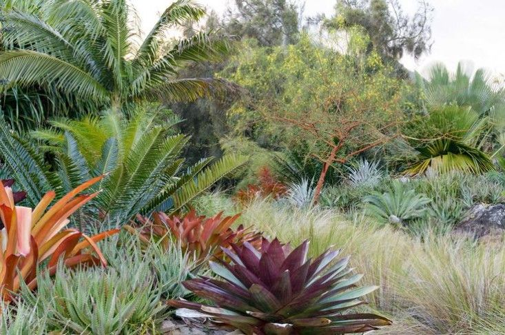 The Accidental Gardeners Artists Helen and Brice Marden in the Caribbean is part of garden Pool Jungles - Longtime tourists to St  Bart's who stopped going there because of the tourists, New Yorkbased painters Brice and Helen Marden turned their attention to