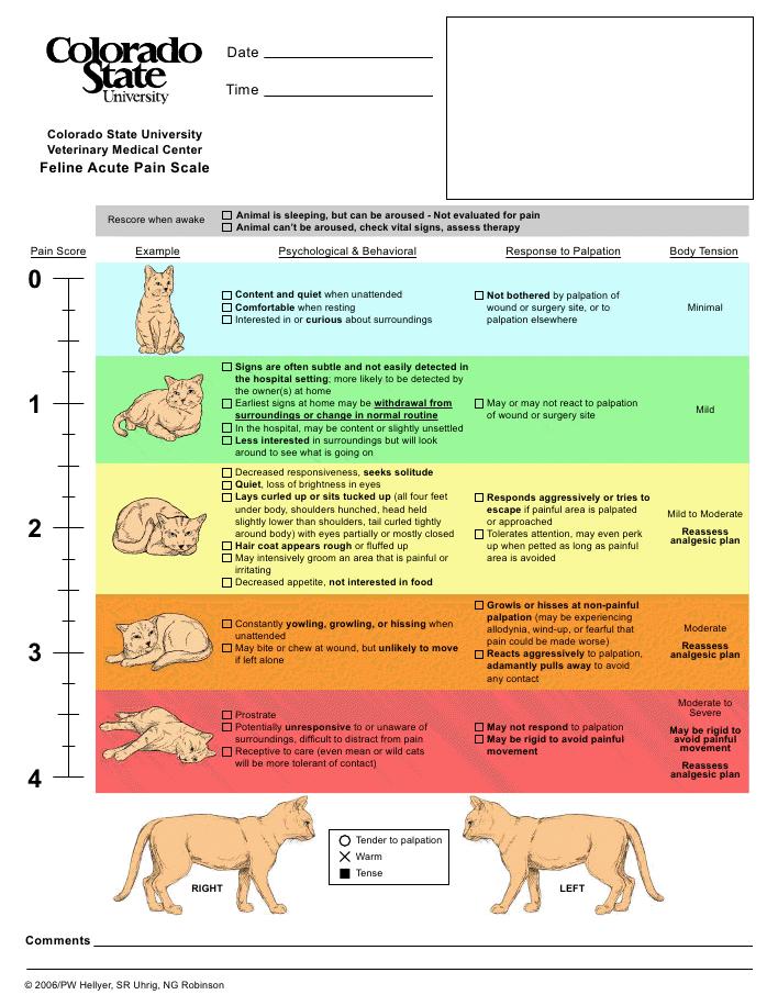 CSU feline pain scale | vettech | Pinterest | Tabla, Gato y Cuadro