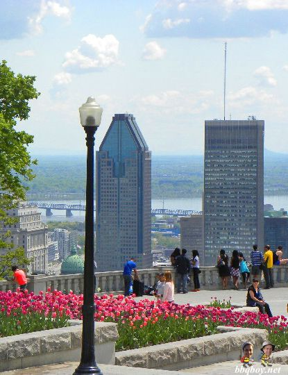 Tulips on Mont-Royal. More spring time photos of Montreal: http://bbqboy.net/photo-essay-montreal-in-the-spring/ #montreal #quebec #canada