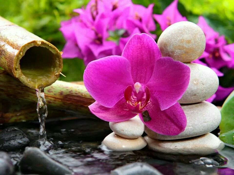 Image result for images  ZEN FLOWERS