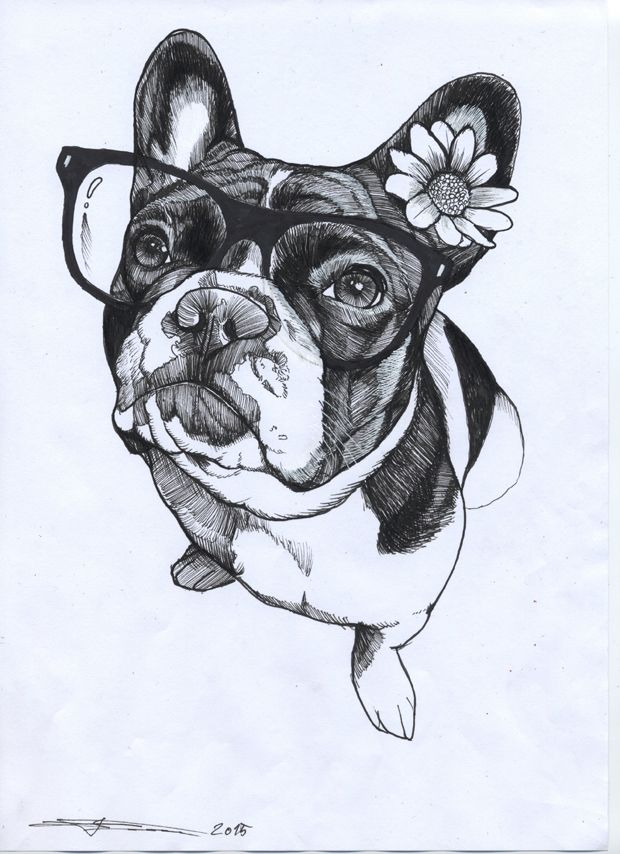Black And White French Bulldog Drawing