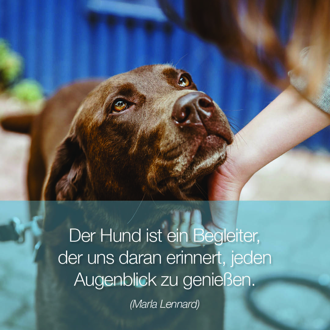 Happilax Hundeartikel Mit Herz Hunde Zitate Hund Zitat Hundespruche Hunde