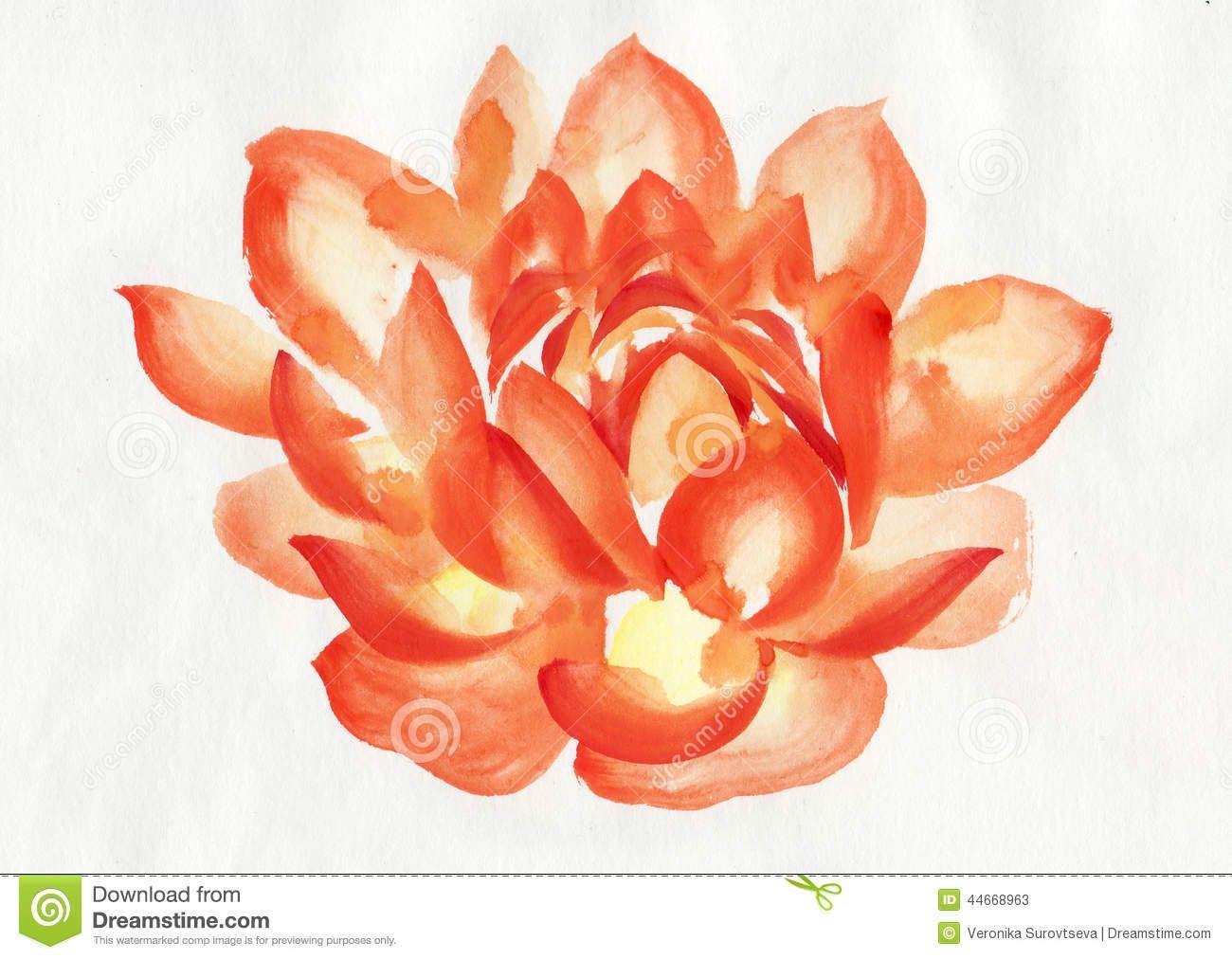 Orange lotus flower orange lotus flower watercolor lotus flowers orange lotus flower orange lotus flower watercolor izmirmasajfo