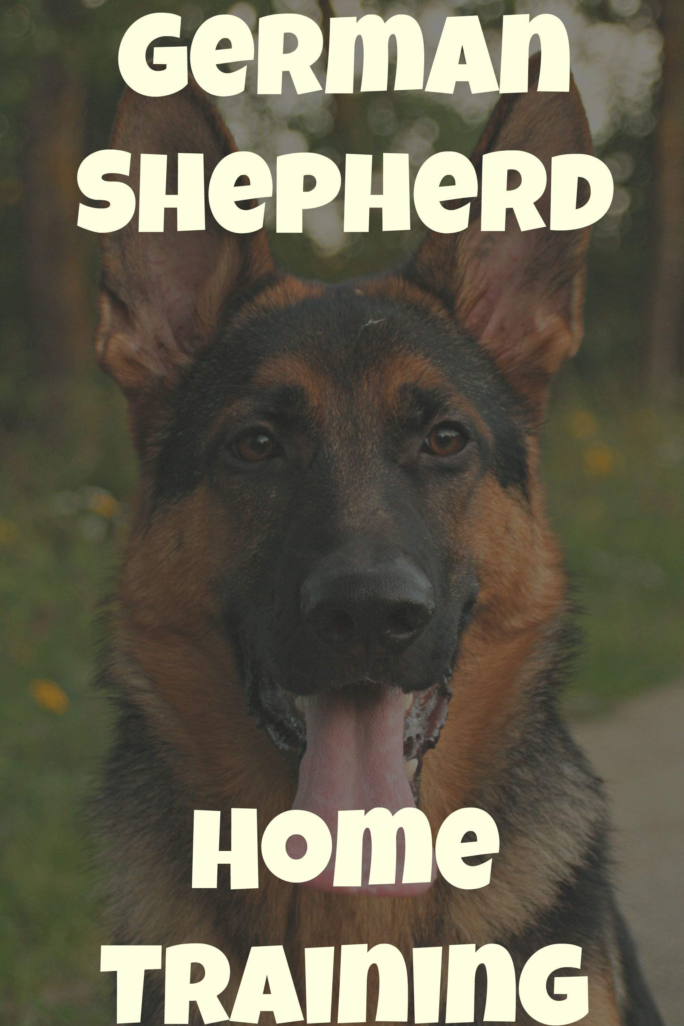 The Cover Of The Best German Shepherd Training Book Coming This