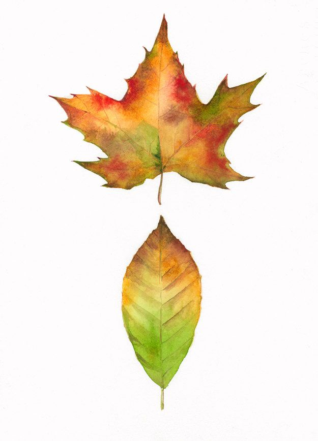 Maple and Beech Leaves -Autumn leaves print of watercolor ...