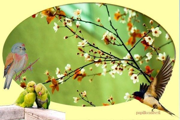 fond ecran printemps birds pinterest fond ecran printemps cran et fond ecran. Black Bedroom Furniture Sets. Home Design Ideas