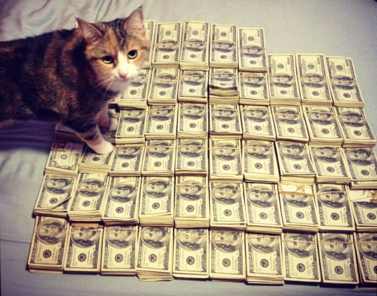 Artist Throws Cats Up A Flight Of Stairs Angers Everyone Kittens Funny Kitten Pictures Money Cat