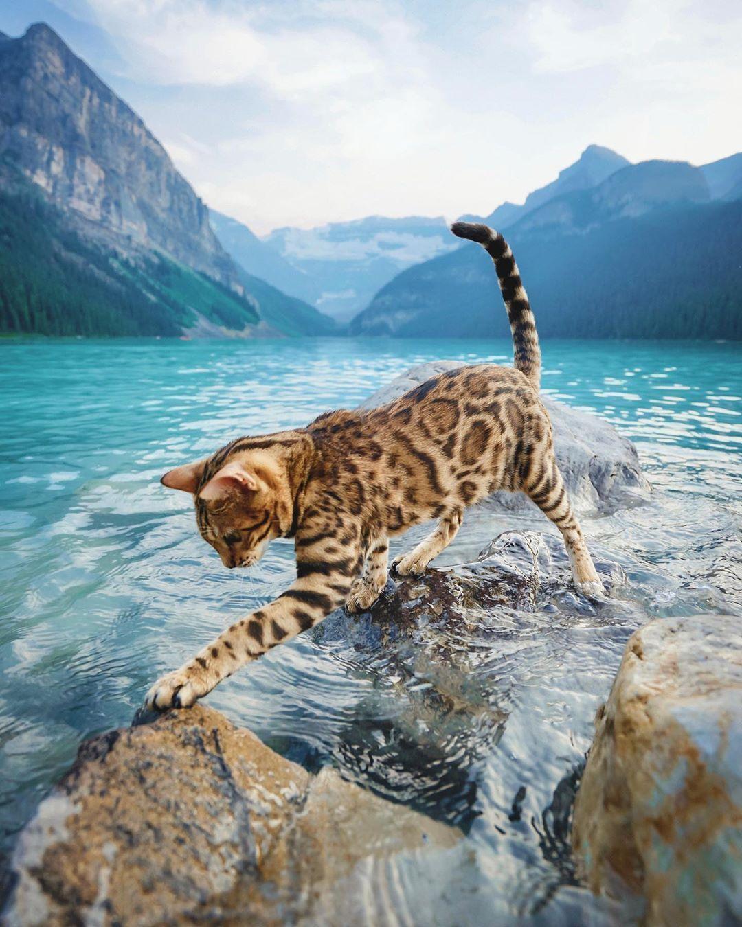Sukiicat Cat Chat Sukiicat In 2020 Katzen Schonen Katzen Hubsche Katzen