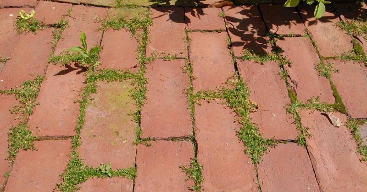 Solution Bio contre les mauvaises herbes! Dalle de beton