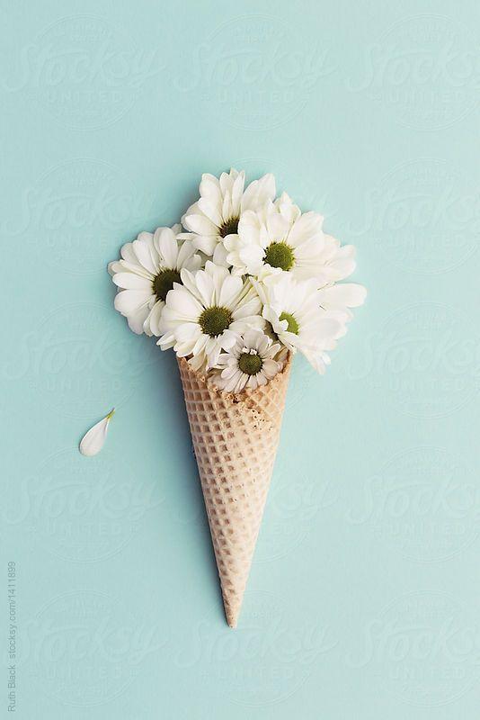 Bunga Daisy