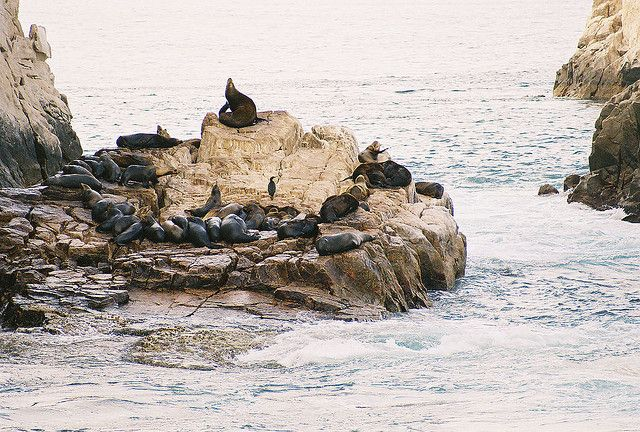 Seals in Cabo San Lucas, Mexico