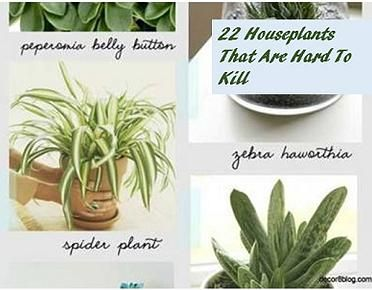 Kaila's Place | 22 hard to kill house plants