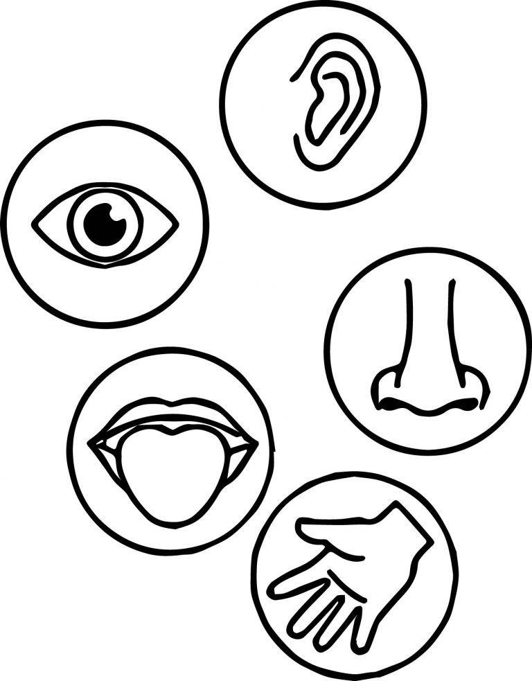 Senses Coloring Page (With Images) Senses Preschool