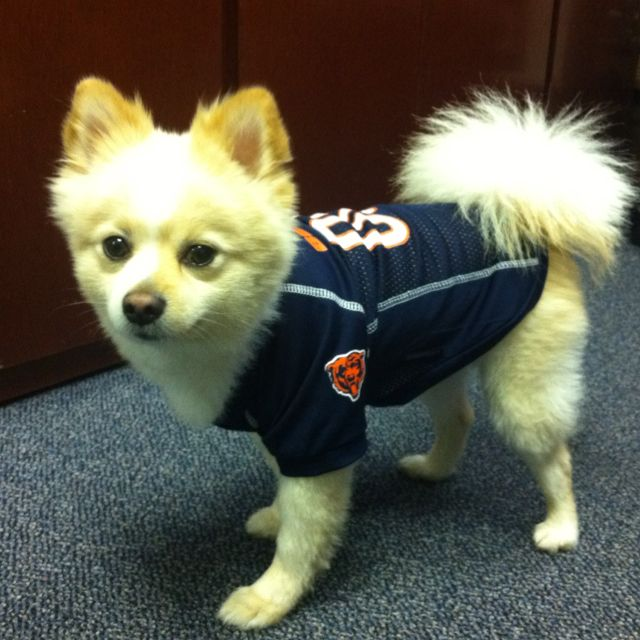 buy online 8d083 a240f Chicago Bears! | My Favorite things | Da bears, Dogs, Bear