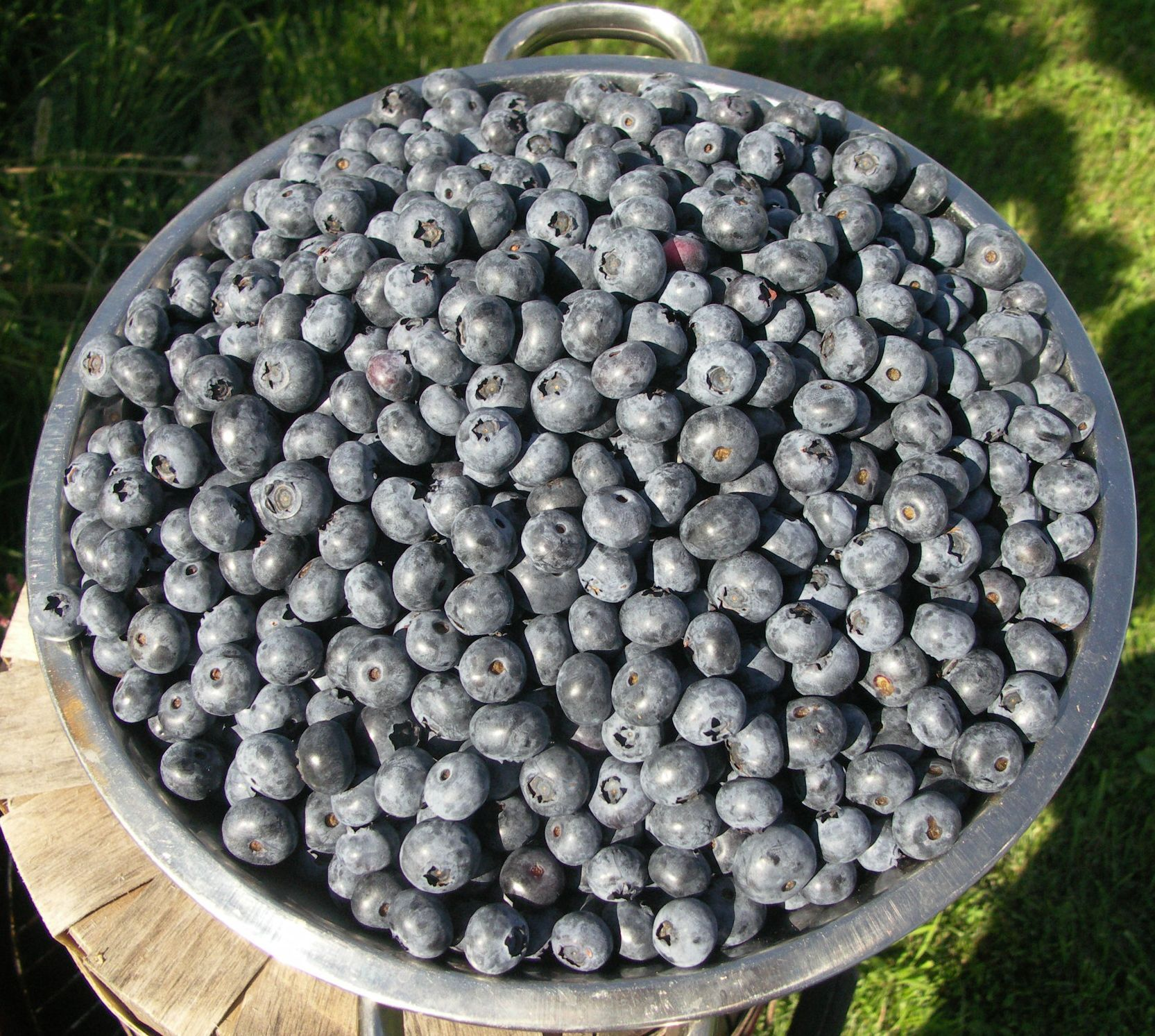 Blueberry Crisp and How to Freeze Blueberries Foodie
