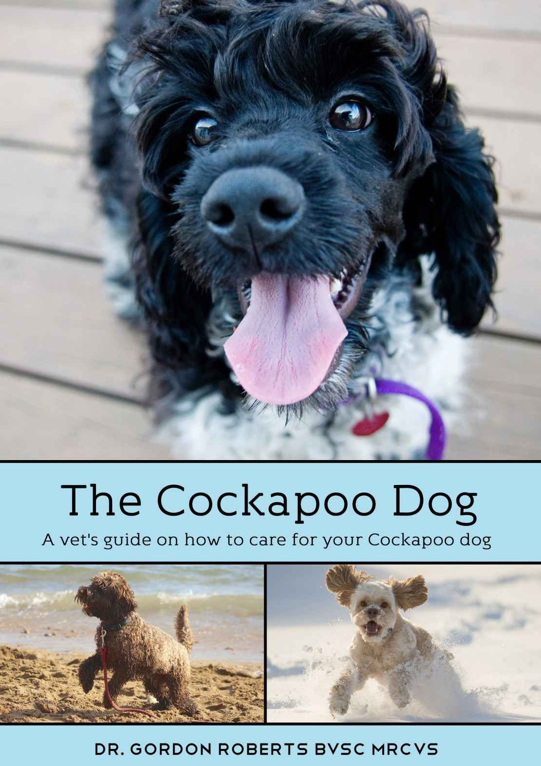 The Cockapoo Dog A vet's guide on how to care for your