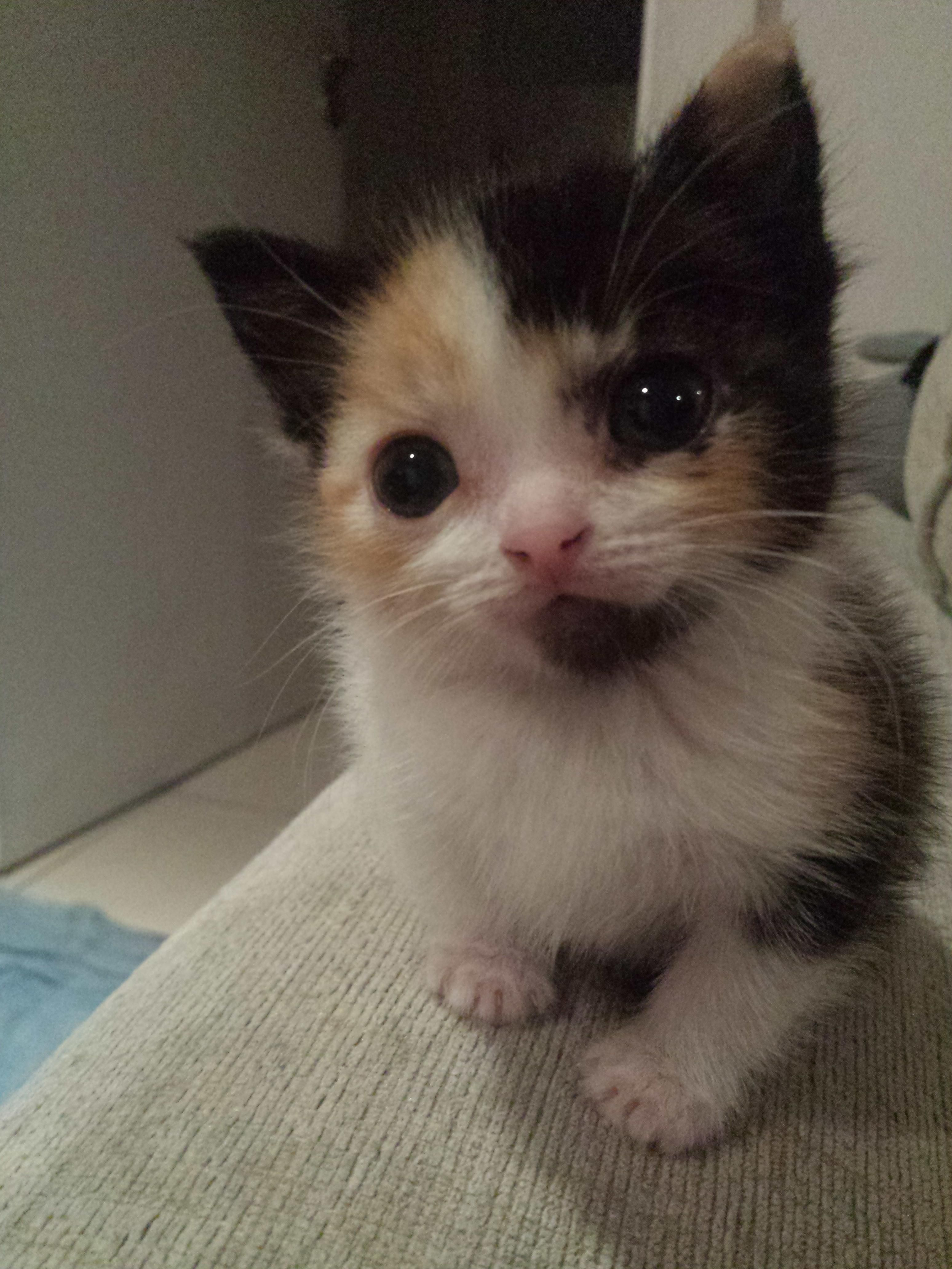 Ready to pounce o your HEART Aww Pinterest