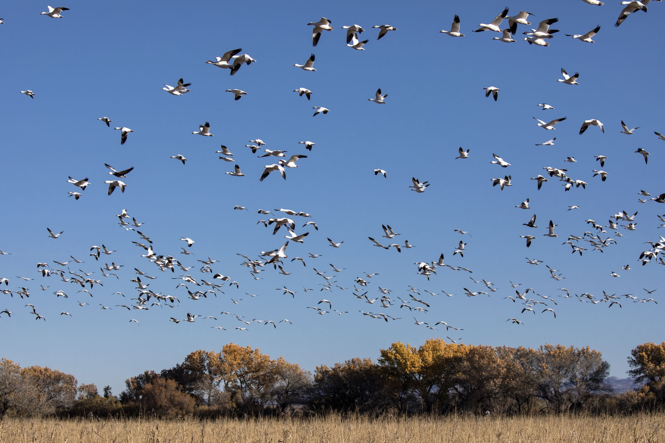 When Is Fall Bird Migration? Birds, Bird migration, Sea