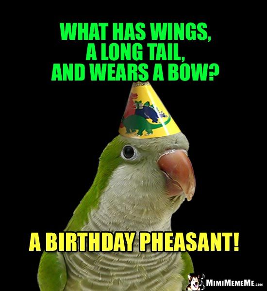 Birthdays Are Hilarious Happy Birthday Jokes Funny Party: Party Party Riddle: What Has Wings, A Long Tail, And Wears