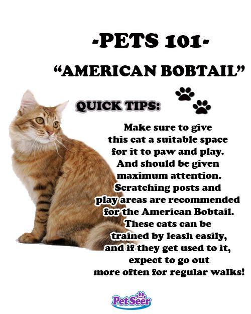 #americanbobtail #dosanddonts!! #funfactfriday #pets #cats ...