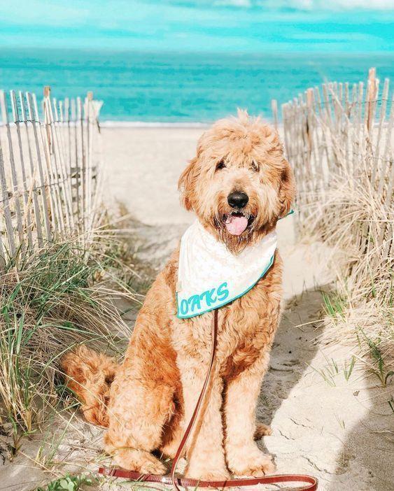 Peach And Aqua X Dog Bandana In 2020 Dog Friendly Vacation Dog Bandana Portugese Water Dogs