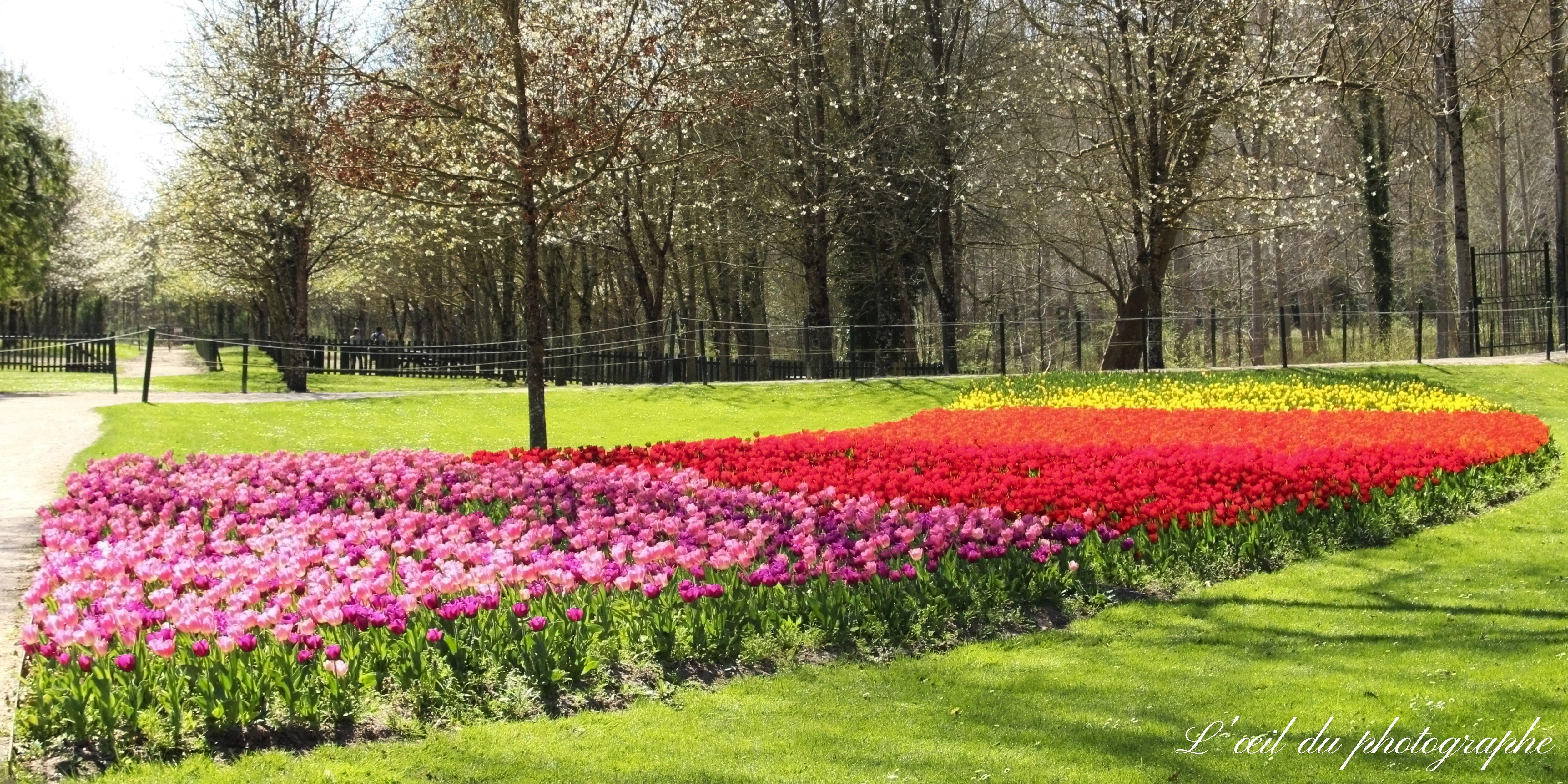 Le jardin des Tulipes - environ 100 000 bulbes plantés   Château ...