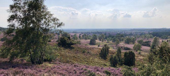 Wanderung in der Lüneburger Heide: Totengrund und Wilseder