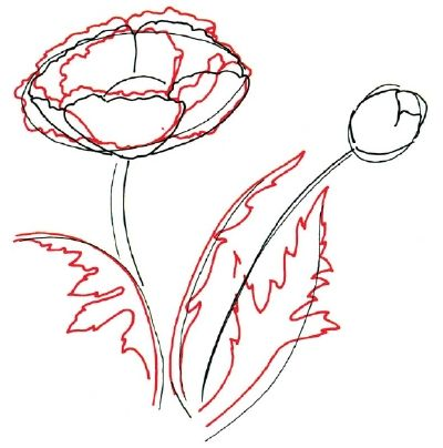 How to draw a poppy in 5 steps pinterest draw flowers how to draw a poppy in 5 steps mightylinksfo