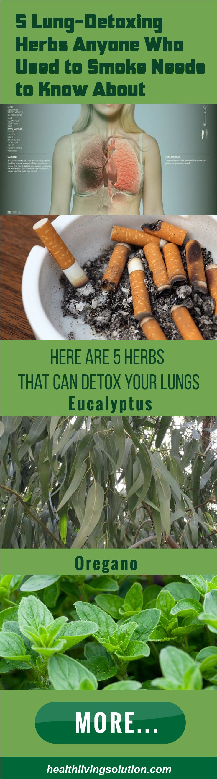 5 Lung Detoxing Herbs Anyone Who Used To Smoke Needs To