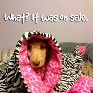 Some ladies—including dogs—just can't pass up a good deal!
