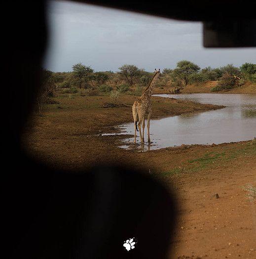 the viewing at the watering hole #kayamoja