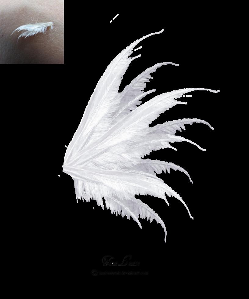 White Transparent Wings Wings Png Fairy Wings Wings