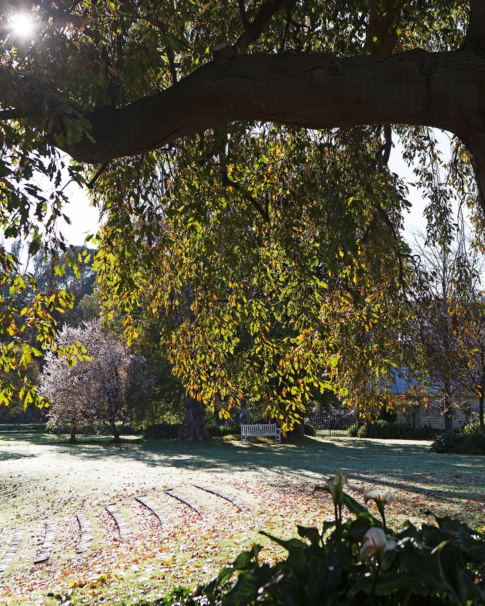 The Planthunter x The Design Files   The garden at Cruden Farm was ...