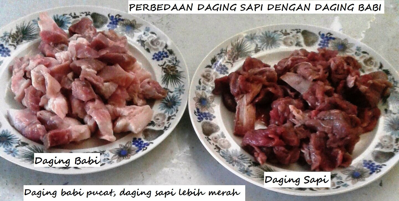 Perbedaan daging sapi dengan daging babi ternakan    Yuk simak uraiannya http://aneka-resep-masakan-online.blogspot.co.id/2015/10/perbedaan-daging-sapi-dengan-daging-babi.html