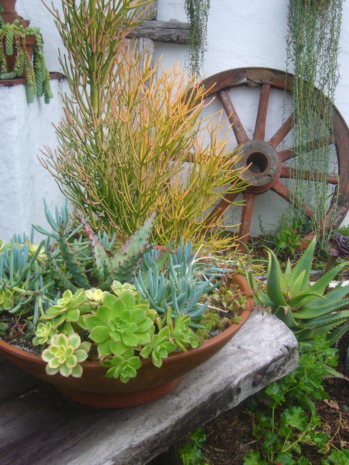 rustic gardenscape of succulents | succulents | Pinterest ...