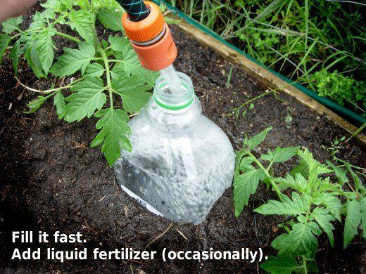 pet flasche mit ein paar loechern eingegraben nutzt zur bewaesserung gardening gardening. Black Bedroom Furniture Sets. Home Design Ideas
