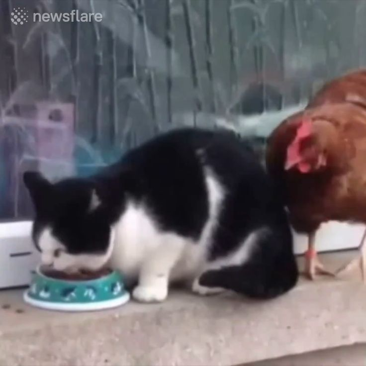 Cats Play With Two Fish - FUNNY 9GAG LOL LMAO