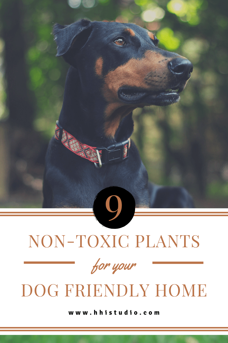 Pet Friendly Plants For Your Home With Images Pets Dog Friends Dogs