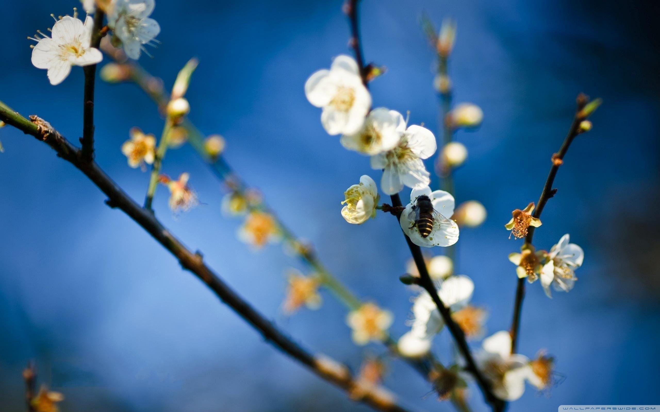 Spring Flowers Wallpapers - WallpaperSafari