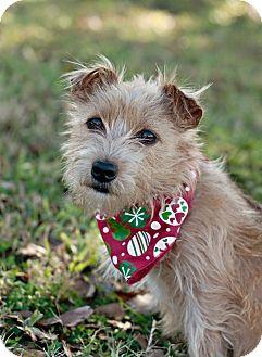 Portsmouth Ri Spitz Unknown Type Small Mix Meet Hannah Coconut A Dog For Adoption Dog Adoption Pet Adoption Animal Companions