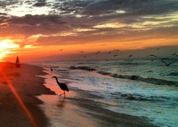 Perdido Key Sunrise Gulf Coast Beaches Vacation Trips Florida