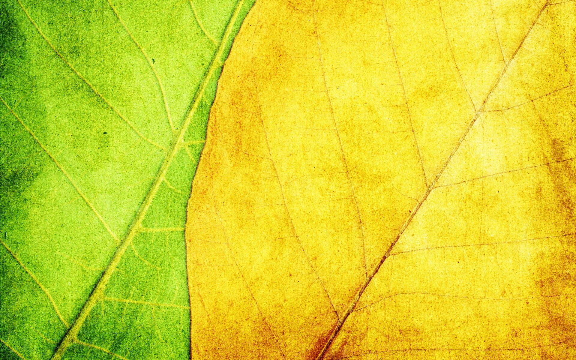 Free Download Texture Leaves Yellow Green Wallpaper
