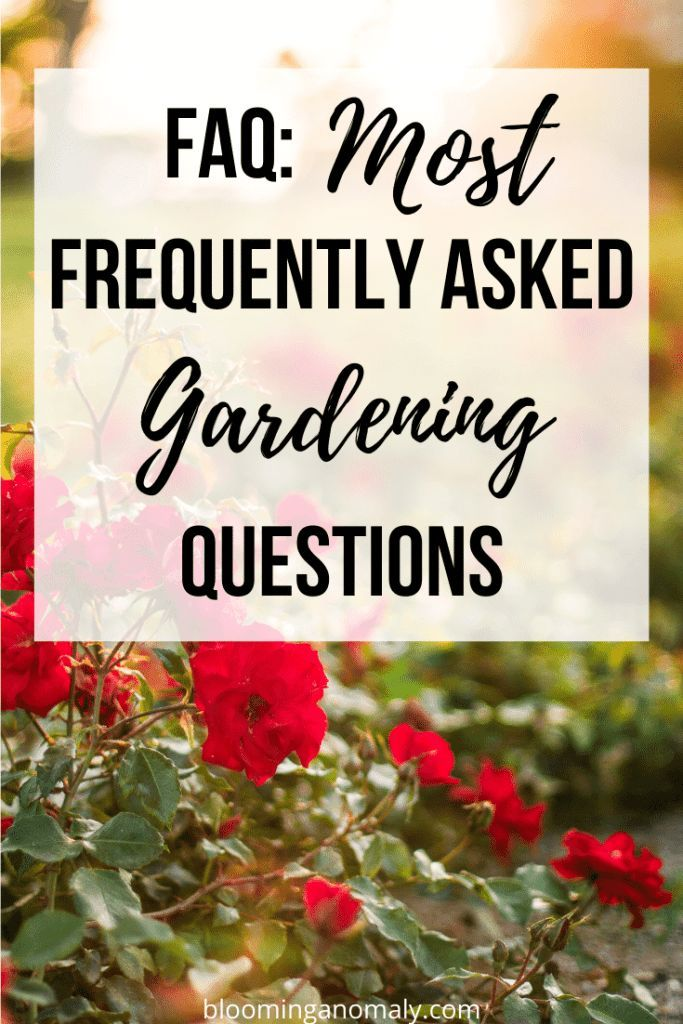 Faq No matter if you are a beginner gardener or have gardened for years there are questions you will ask yourself about your garden from time to time These faq about gard...