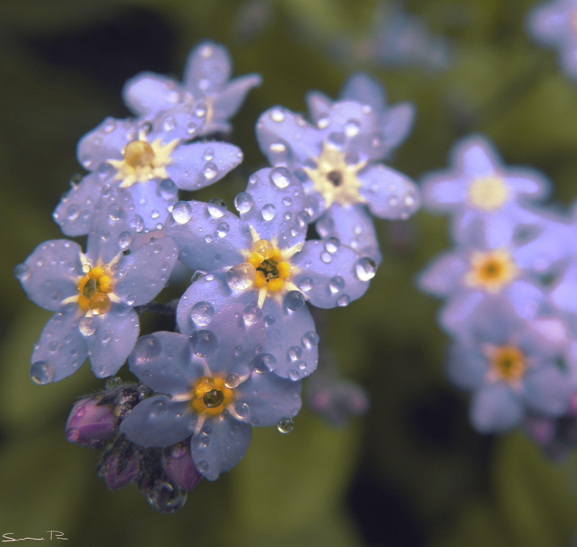 Spring Rain Wallpapers
