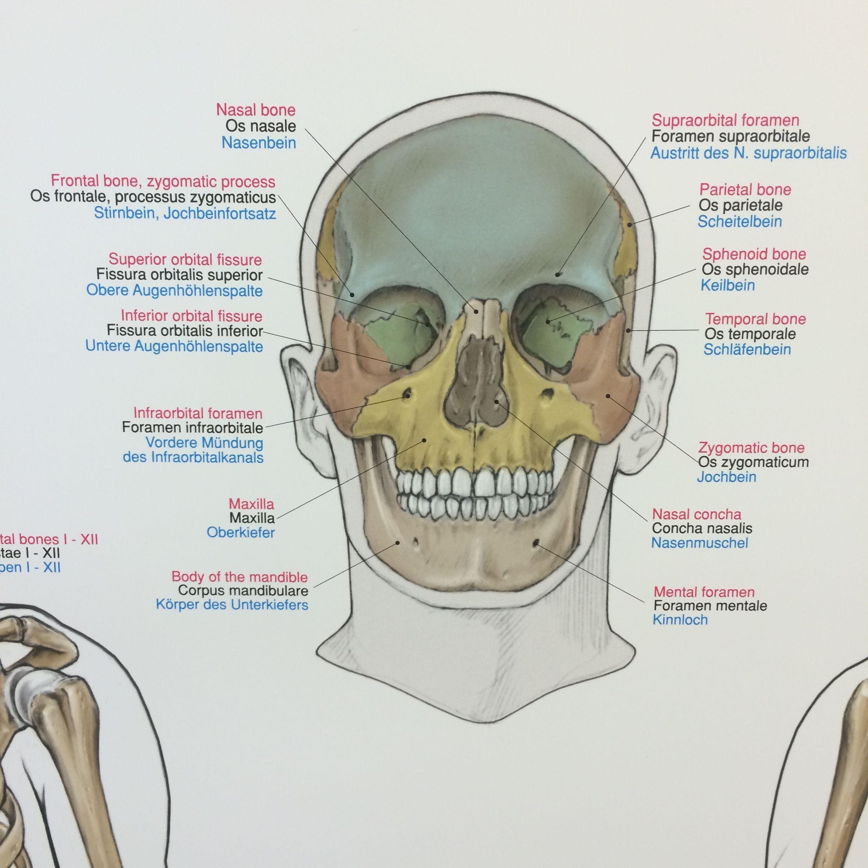 Fantastisch Untere Gi Anatomie Bilder - Menschliche Anatomie Bilder ...
