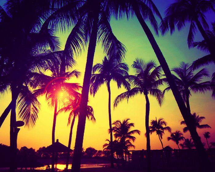 Bloggen Er Fjernet Palm Trees Wallpaper Sunset Tumblr Beach Tumblr