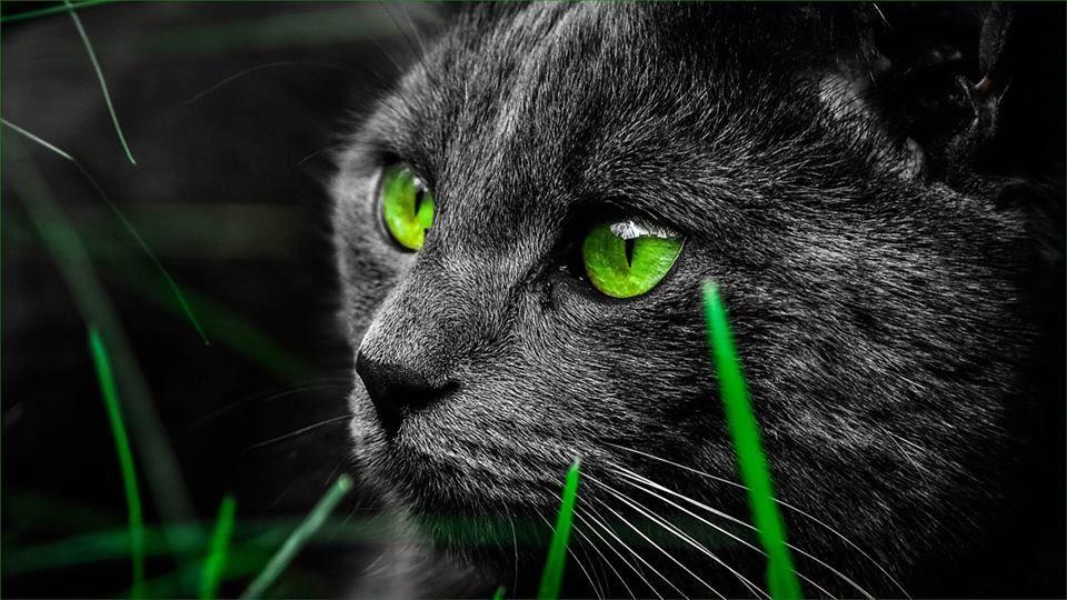 Https Www Facebook Com 171224156864065 Photos A 171224976863983 329126847740461 Type 3 Theater Cat Wallpaper Cats Free Cats Cool cat eyes wallpaper