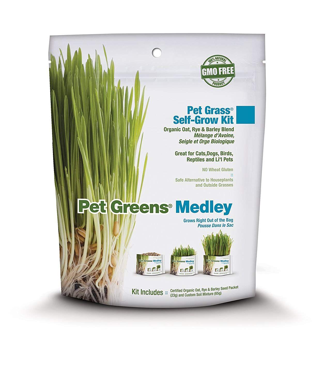 Pet Greens SelfGrow Pet Grass Kit >>> Great to have you