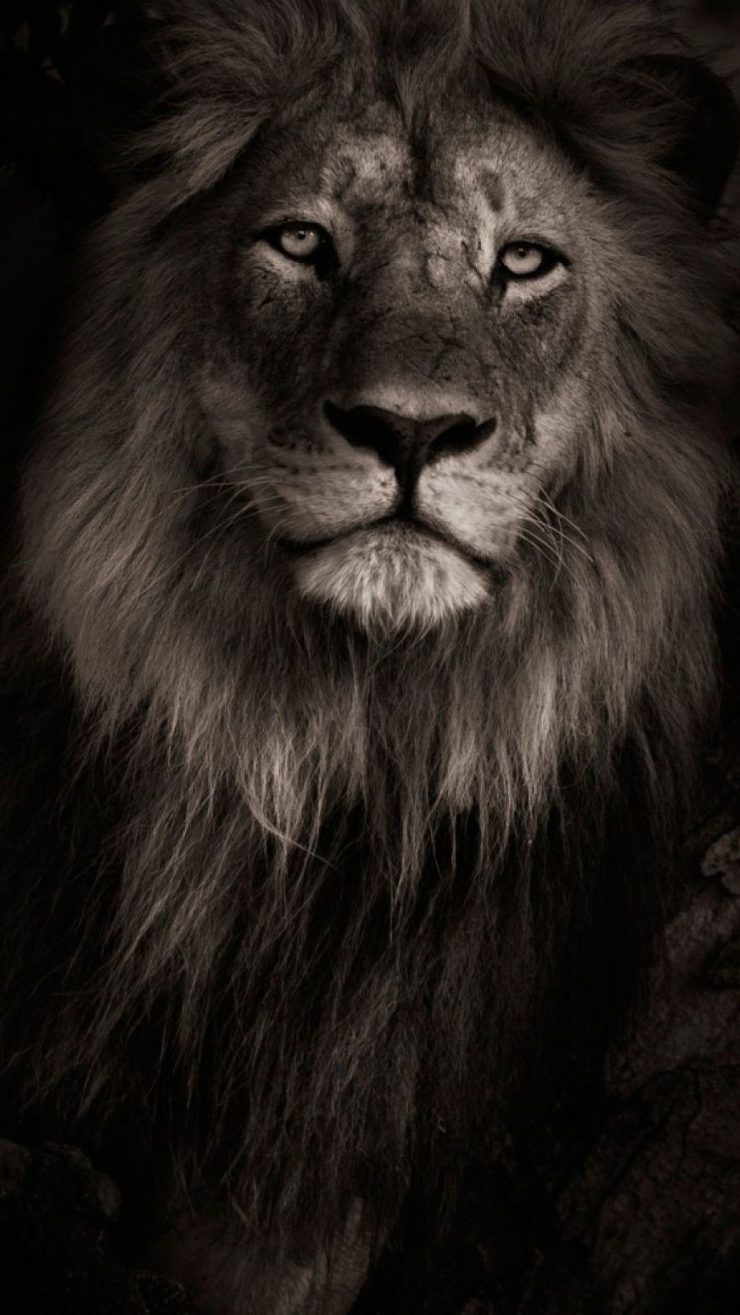 Lion Iphone Android Iphone Desktop Hd Backgrounds Wallpapers 1080p 4k 124844 Hdwallpapers An Lion Wallpaper Lion Wallpaper Iphone Lion Background