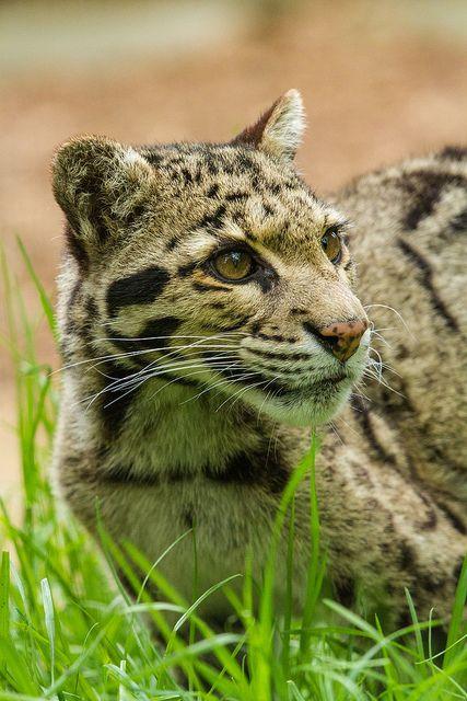 Wildlife Heritage Foundation - May 2013 | Flickr: Intercambio de fotos